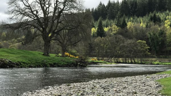 Fly fishing diary: April 2017